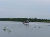 Swamp Boat- Louisiana Bayou